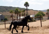 Color Me Friesians