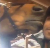 The Cutest Selfie Video Ever - Man and Horse Exchange Kisses