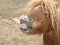 Scientists discover 17 horse facial expressions, more than chimpanzees