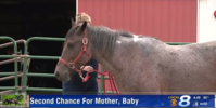 HorseClicks reaches out to rescue charities after pregnant mare is poisoned by owner