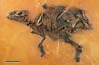Horses Have Been Giving Birth The Same Way For 48-Million Years
