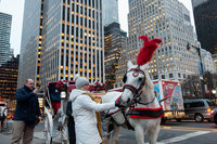 New York City Declares Deal On Carriage Horses In Central Park