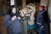 Volunteers explain about horrendous horse neglect