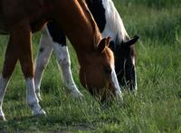 New Mexico Succeed In Fight To End Horse Slaughter