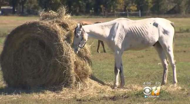 Ranch in texas a rescue ranch in north texas received complaints about