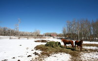 'Ecosanctuary' Plans for Wild Horses Add Tourism to the Mix
