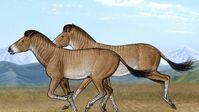 Three-toed horses once roamed TIbetan plateaus, skeleton reveals