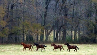 Retired race horse rescue group is accused of neglect by Attorney General Eric Scheiderman