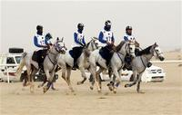 In UAE, horses are big business as well as passion