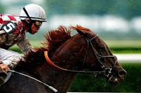 Racing needs another Funny Cide
