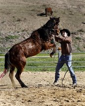 Sunol horse trainer named 'rookie champion' at SoCal event