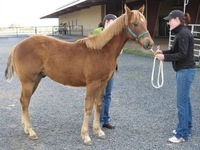 Popular Low-Cost Gelding Program Expanding Beyond CA