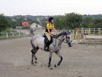 Decoding Horse Behavior to Prevent Accidents