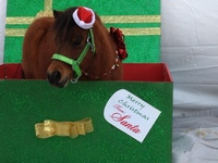 Horseclicks Christmas Photo Contest-WINNER!!