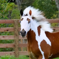 The most unique horse markings. You won't believe the last photo