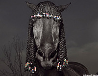 The Mane Attraction…..Equine Supermodels