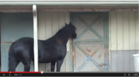 Horses Disappear. Owner Sets Up Camera, You'll Never Guess What Happens.