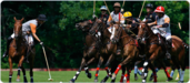Learn to play Polo at the Buckingham Polo Club and Academy