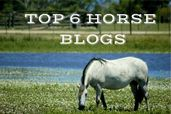 Our Top 6 Horse Bloggers You Should Be Following