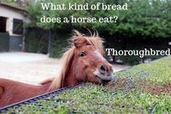 These are the Funniest Jokes Ever Told by Horses