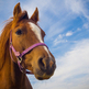 Federal judge temporarily bans helicopters in horse roundups