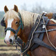 Horse-powered farming on the rise