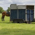 Horses AND a trailers for sale!