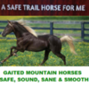Safe Gaited Horses for your trail-riding fun